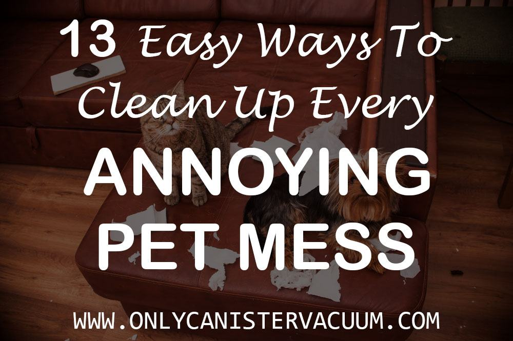 13-Easy-Ways-to-Clean-up-Every-Annoying-Pet-Mess