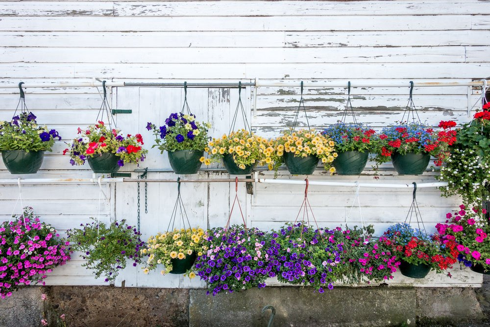 Hanging-Baskets